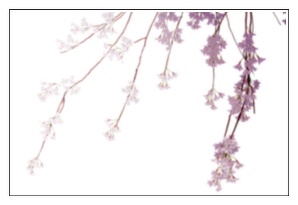 桜包み1枚目(4C)