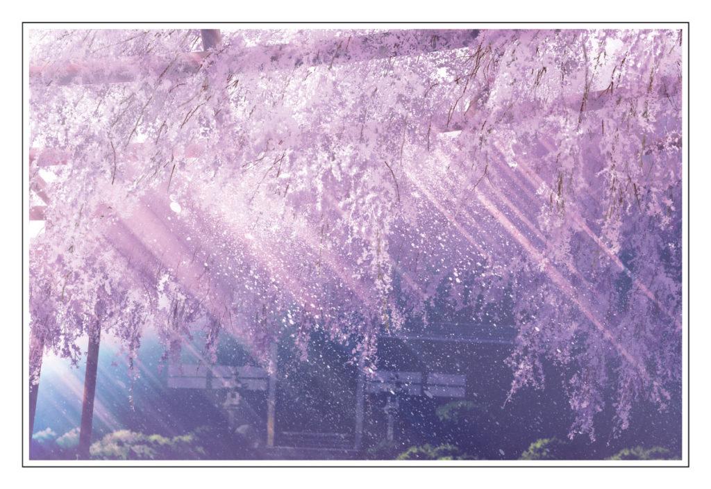 桜包み3枚目(4C)